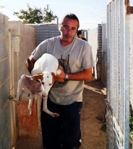 1. En livredd Podenco blir baret ut fra buret sitt og ut av senteret.